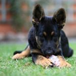 QUIT KILLING YOUR DOG WITH PROCESSED FOODS