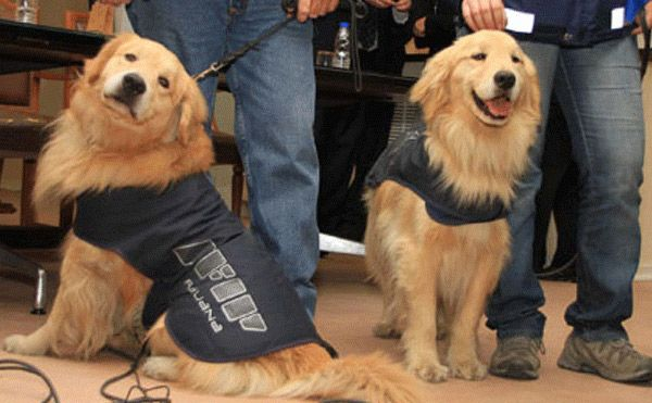 Sniffer Dogs for Tech You'll Still Need a Warrant, Officer