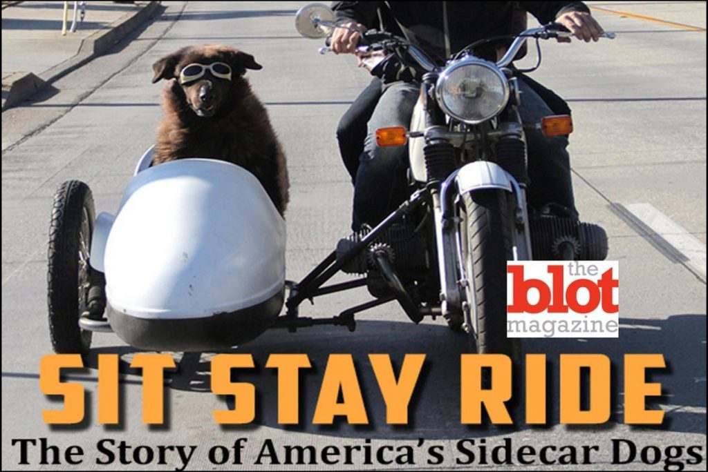 Exclusive Interview, 'Sit Stay Ride' Celebrates Dogs Riding in Sidecars
