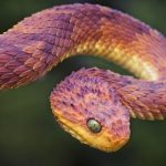 The 5 Most Badass Snakes We Did No Research On