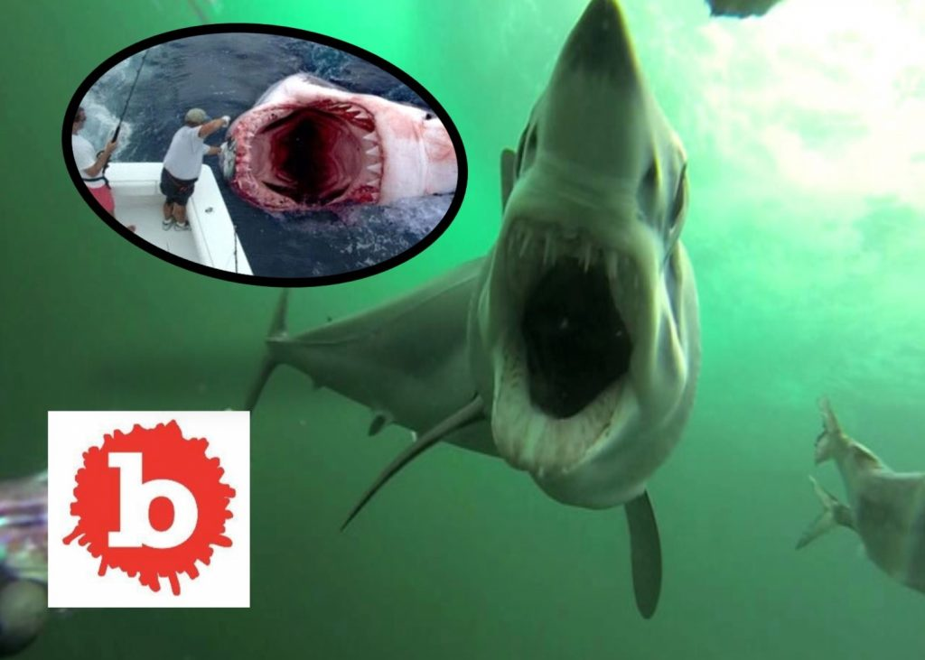 Shark Attacks JUMP THE SHART BEFORE THE SHARK JUMPS YOU