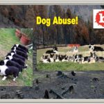 Frolicking Dogs to Help Restore Chilean Forests from Fire Damage
