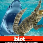Alligators Will Eat Sharks, With Documented Evidence