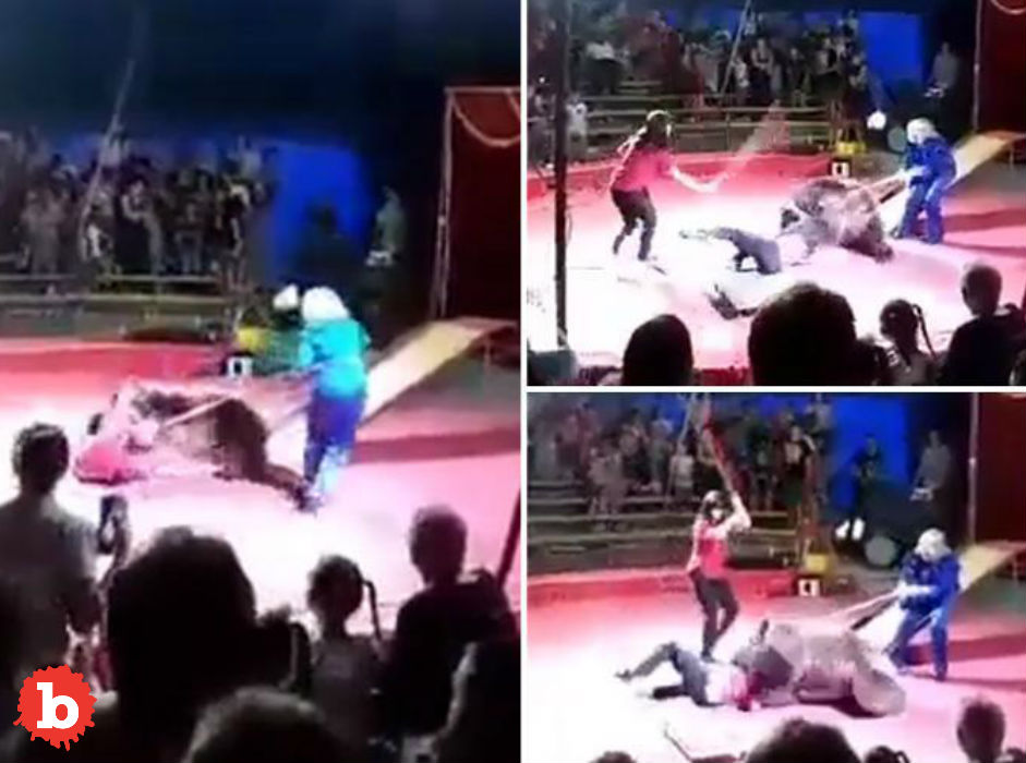Tortured? Circus Bear Attacks Abusive Handler in Show