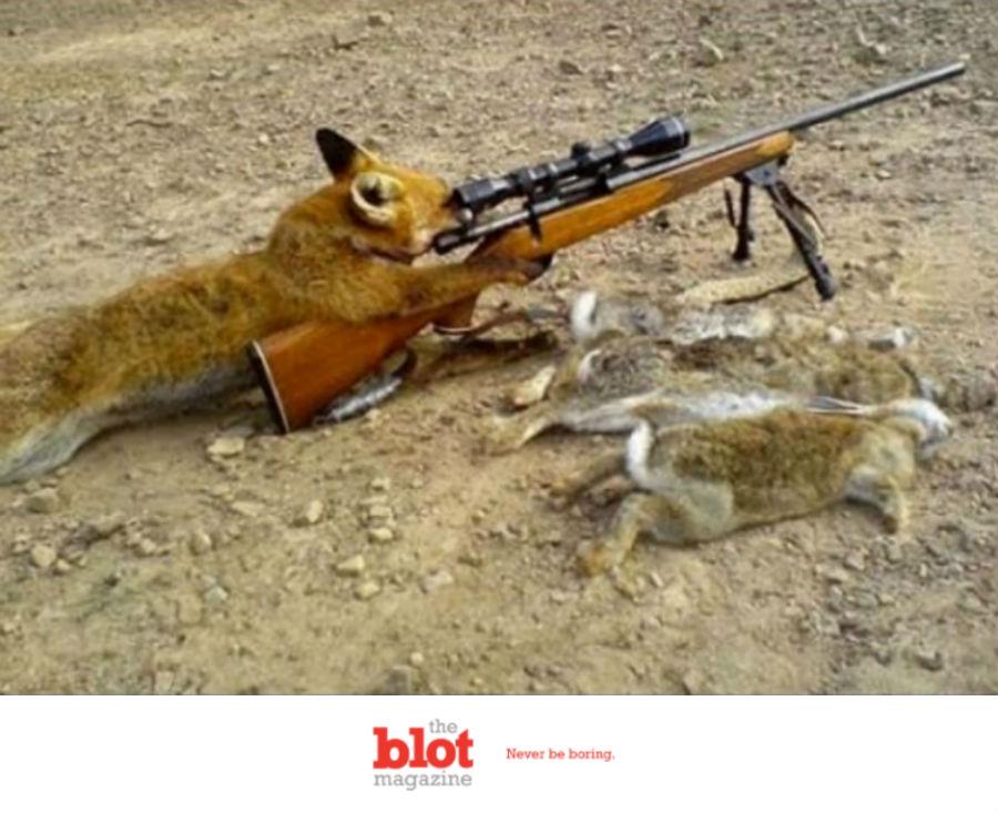 Dog Shoots 74-Year-Old Hunter With Shotgun