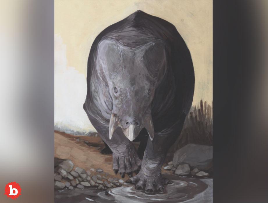 Fossil of Elephant Sized Mammal Found From Dinosaur Era