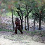 Mistaken for Bigfoot, Man Shoots at Other Montana Man