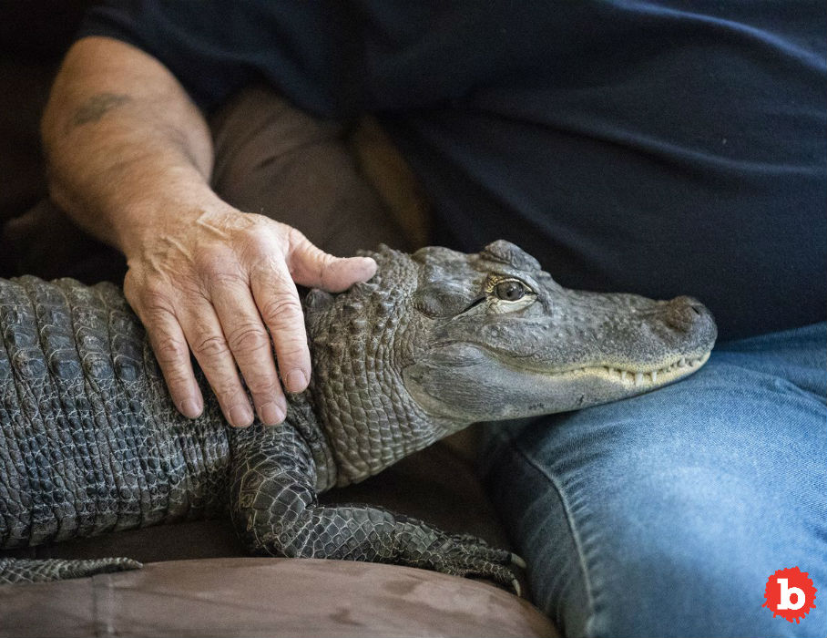 Penn Man Has Alligator for Emotional Support