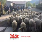 French Alps Primary School Register 15 Sheep to Stay Open