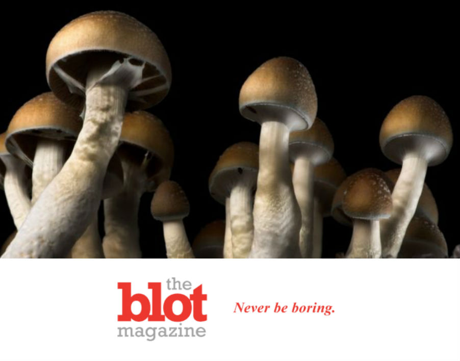 Oakland Legalizes Organic Trips, Shrooms, Peyote and More