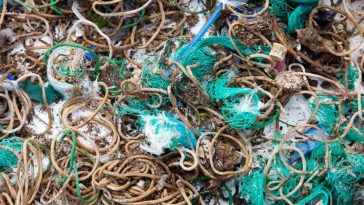 Birds Mistake Rubber Bands for Worms, Cover Island in Litter