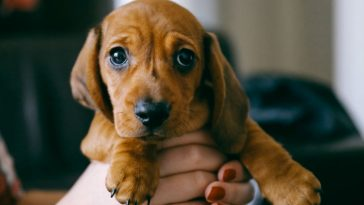 Infection Resistant to Drugs Tracked to Pet Store Puppies
