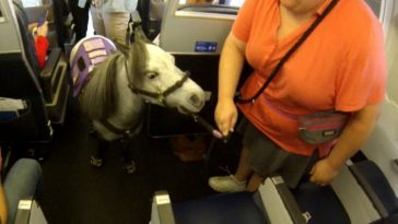 Woman Takes My Little Pony Support Animal On Domestic Flight