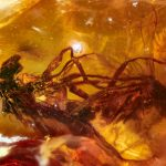 Flies Humping for 41 Million Years in Pornographic Amber