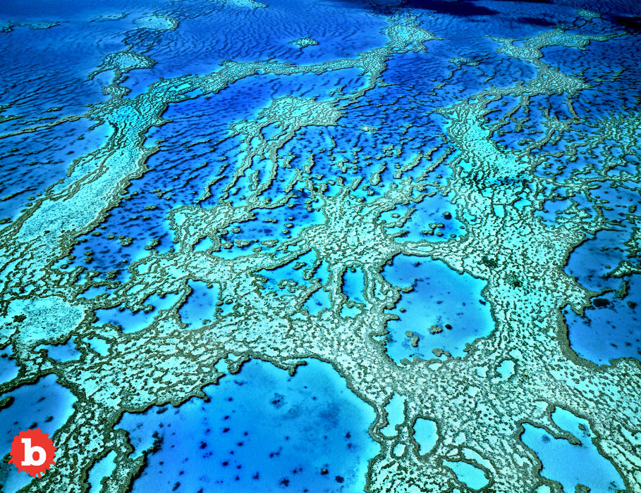 Play the NASA Video Game for You to Save Coral Reefs!