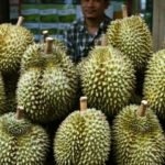 Durian Fruit Strikes Again, Evacuating Post Office in Bavaria