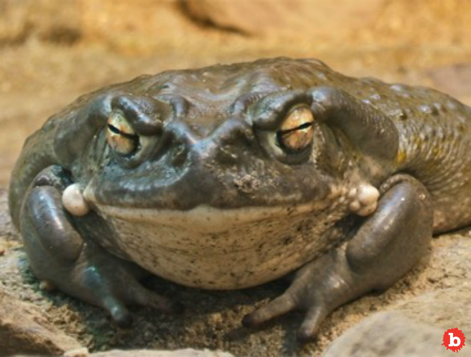 Psychedelic Toad Venom Ritual, Penis Candles, Porn Star and Murder