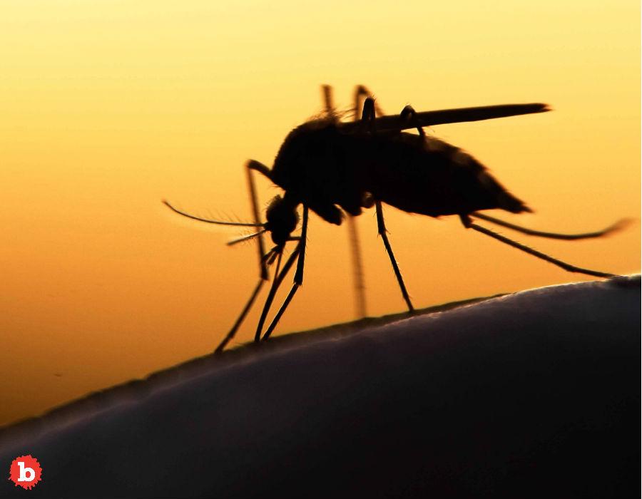 Florida to Release 750 Million Mosquitos to Combat…. Mosquitos