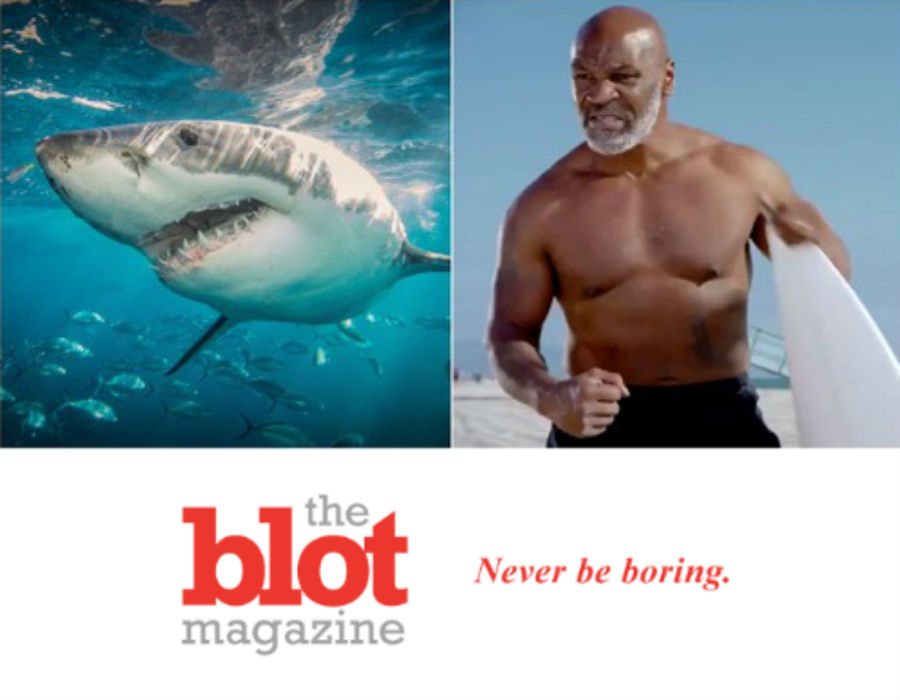 Terrified Mike Tyson Puts Shark to Sleep, Tickling Its Nose