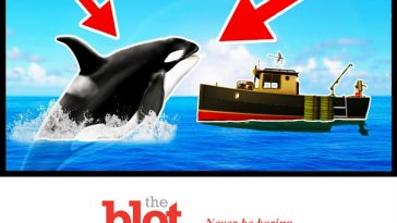 Orcas! Pod Near Spain Attacking, Ramming Local Boats