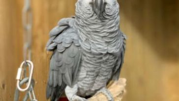 Donated-Parrots-Removed-From-Park-For-Swearing-At-Visitors