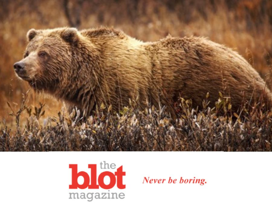 Grizzly Bear Kills Professional Backcountry Guide in Yellowstone