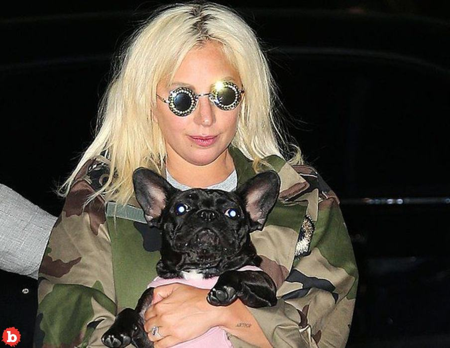 """Woman Who """"Found"""" Lady Gaga's Dogs Now Under Arrest"""