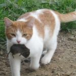 Chicago is Rat City, As They Release 1,000 Feral Cats for Rat War