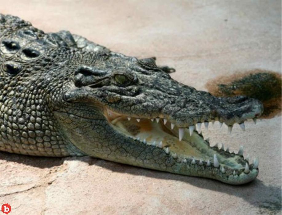 Teen Survives Insane Crocodile Attack on Puerto Vallarta Beach