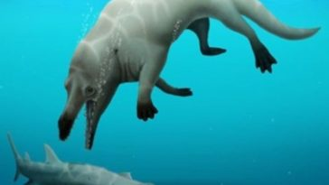 Here Is Phiomicetus Anubis, Whale That Looked Like a Dog